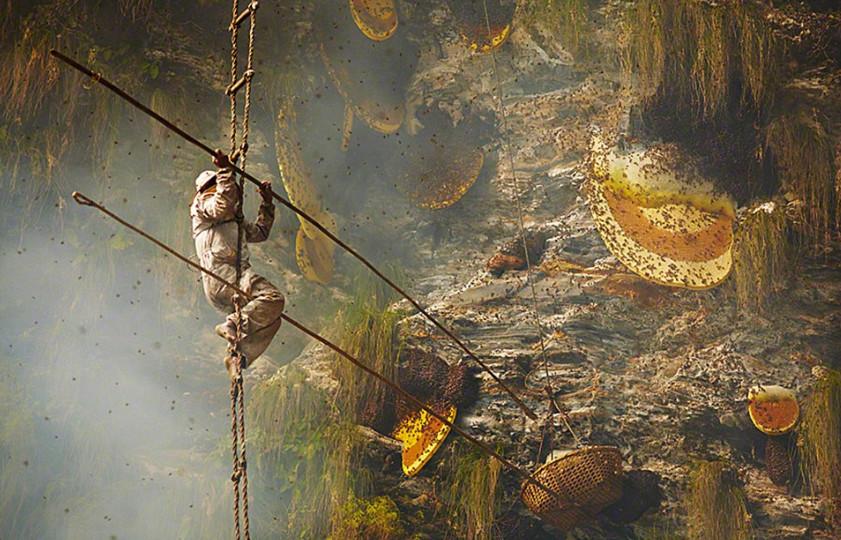 Sự nguy hiểm của nghề săn ong rừng