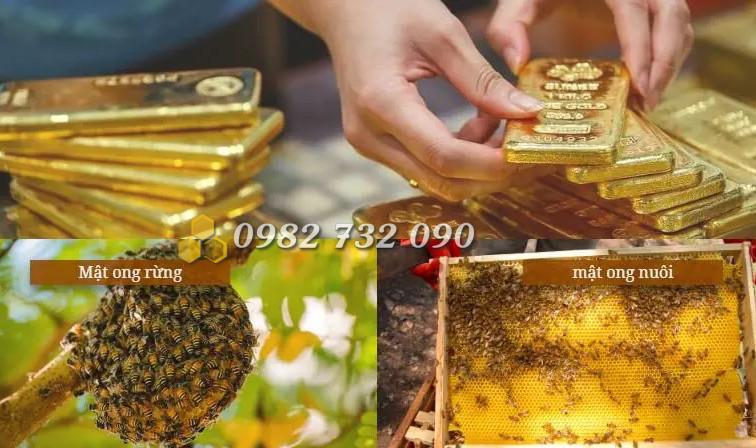 Giá mật ong rừng và mật ong nuôi