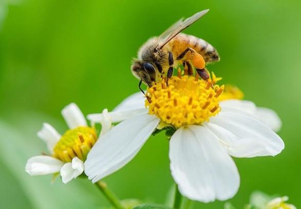 Các loại hoa lấy mật cũng ảnh hưởng đến giá mật ong