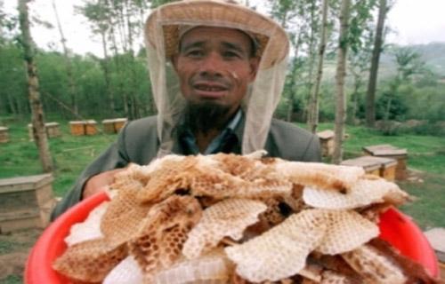 Một nông dân Trung Quốc thu hoạch mật ong thật