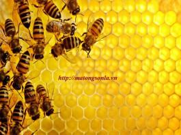 Bán mật Ong nguyên chất tại hà nội