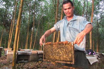 Câu truyện về nghề nuôi ong