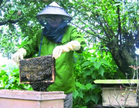 hình ảnh về người nuôi ong mật