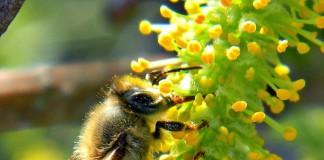 lợi ích từ mật ong