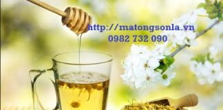 http://matongsonla.vn - Những lợi ích của trà hoa cúc mật ong