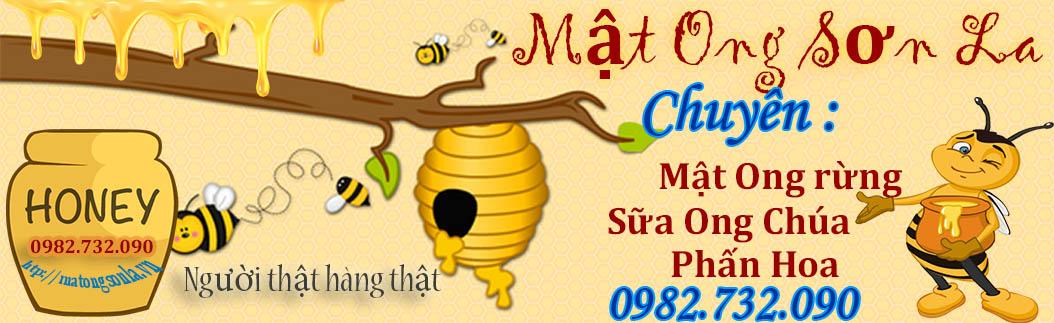 Mật ong nguyên chất sơn la uy tín, chất lượng