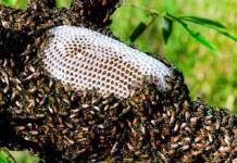 Lý do vì sao sản lượng mật ong năm nay lại giảm sâu như vậy