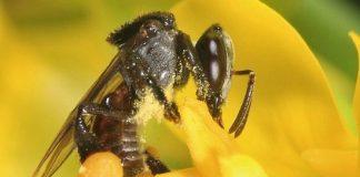 Giá trị của mật ong rú trong tự nhiên