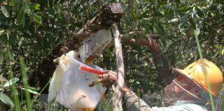 Mật ong bị pha thêm nước đường bán