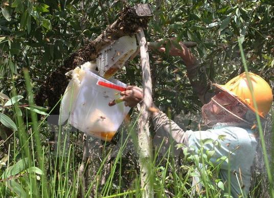 Mật ong rừng u Minh Hạ ngon là thế nên bị làm giả cũng không có gì lạ